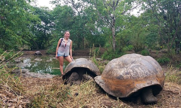 Walking with Galápagos Tortoises
